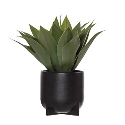 Agave Megan Black Pot