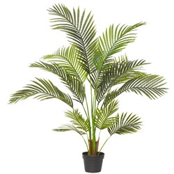 Areca Palm 120H Garden Pot