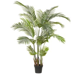 Areca Palm 170H Garden Pot