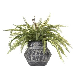 Boston Fern Zina Pot