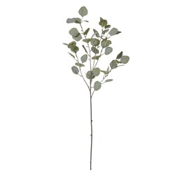 Eucalyptus Stem Green