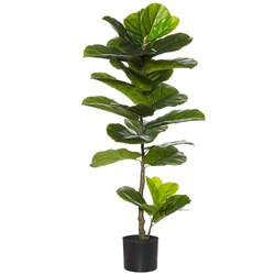 Fiddle Leaf Fig Plant 110cm H